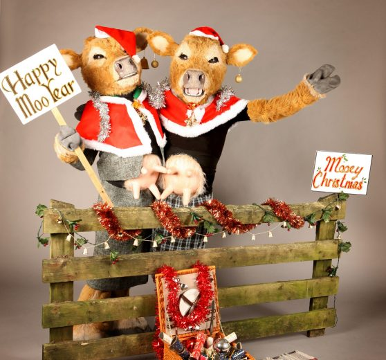 Comedy Christmas Cows